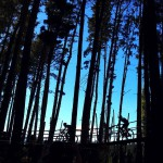 The @AbsaCapeEpic riders pass through the woods at Paul Cluver wine estate this morning. #AbsaCapeEpic